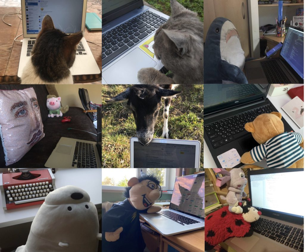 Remote work with pets and toys.